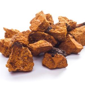 Chaga Pilz aus Sibirien auf weissem Grund
