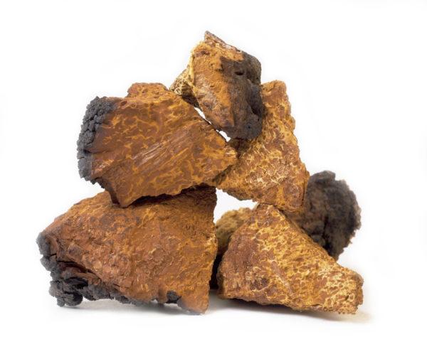 Chaga Pilz aus Sibirien